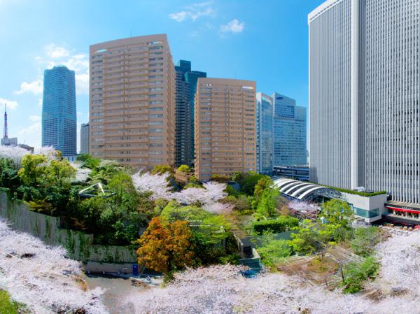 Park Court Akasaka Sakurazaka View